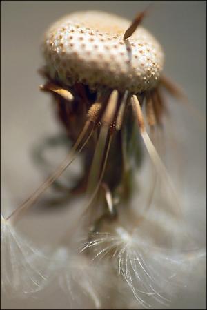 medium_BLOG-Macro-fleur-pollen-1.2.jpg